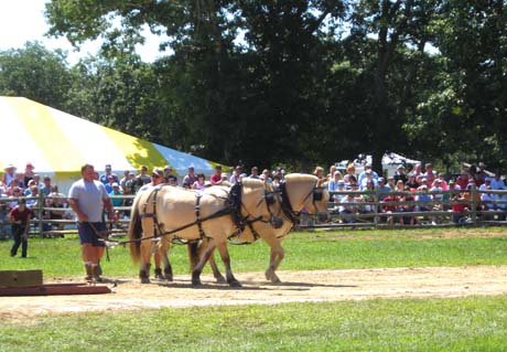 Agricultural fair, West Tisbury Martha's Vineyard