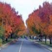 autumn107