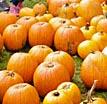 pumpkins107