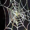 spider107