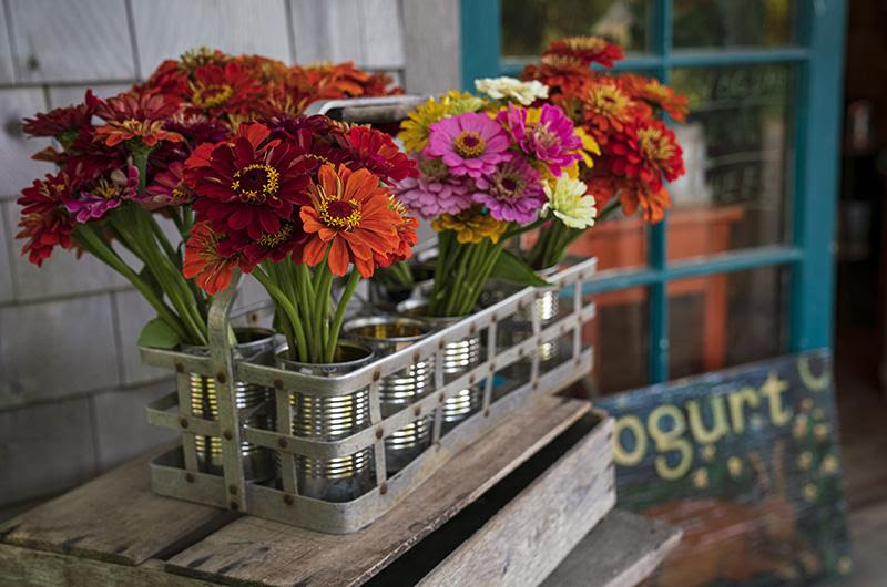 Bouquets of flowers at a farm stand.