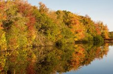 Autumn trees reflected in a still pond